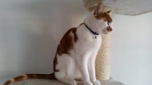 3-15 box-katten-bord-naam-diy-deksel op box-geen kat in de box-5