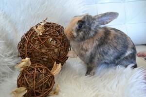 5-25-nanny-spelen-konijnen-huisdierenplein-kinderen-konijnenspel-speelballen-boredom-breaker